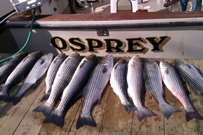 Fishing Charters Cape Cod